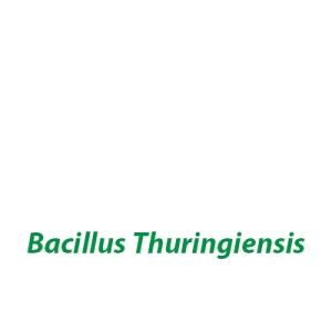 inseticida microbiológico Bacillus Thuringiensis