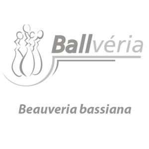 inseticida microbiológico Beauveria bassiana
