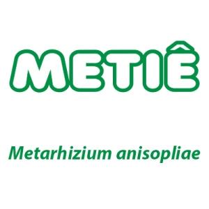 inseticida microbiológico Metarhizium anisopliae CIGARRINHA DOS PASTAGENS